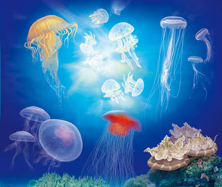 jellyfish (medusa) and coral reefs on the seabed with blue sea background