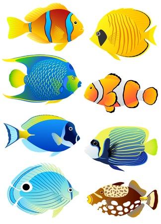 Vektor für Collection of colorful tropical fish.  - Lizenzfreies Bild
