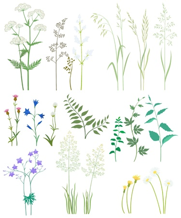 Collection of herbs and wild flowers on white background.
