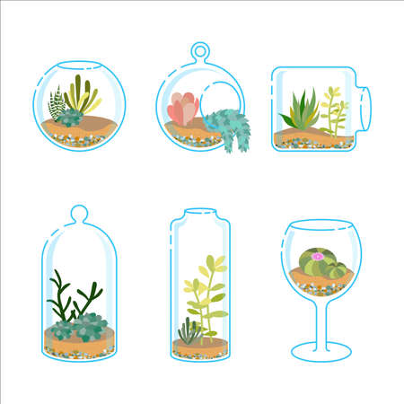 Set of flat florariums with different succulents and cactus for design modern interior. Plant in a glass aquarium. Vector illustration isolated on wight background
