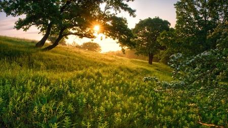 Foto de Morning in the forest, through a tree the sun shines - Imagen libre de derechos