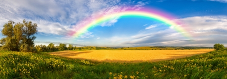 Panorama of a big summer field shined with the sun, with clouds and rainbow in the sky on background