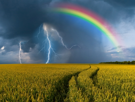 Summer landscape with big wheat field and road, thunderstorm with rain and rainbow on background