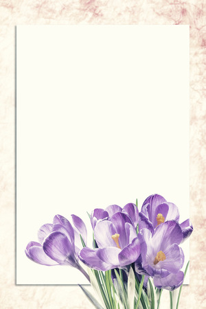 Foto de Sheet of paper and crocus flowers with places for your text. Vintage stylization, retro film filter - Imagen libre de derechos
