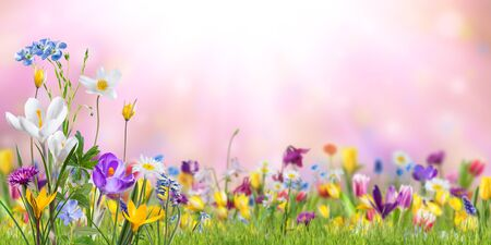 Photo pour Nature background with wild flowers in green grass on meadow; selective focus. Spring wallpaper for greetings card design - image libre de droit