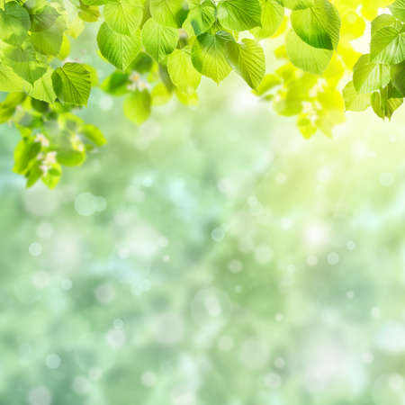 Photo pour Spring green card with beautiful leaves on branch and place for your text - image libre de droit