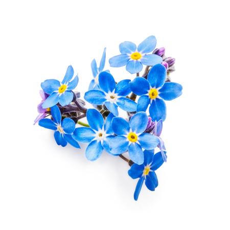 Foto für Blue forget me not flowers bunch isolated on white background  . Heart shape - Lizenzfreies Bild