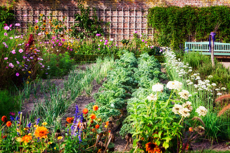 Photo pour Vegetable garden in late summer. Herbs, flowers and vegetables in backyard formal garden. Eco friendly gardening - image libre de droit