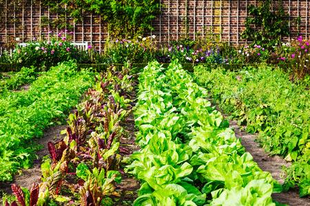 Foto de Vegetable garden in late summer. Herbs, flowers and vegetables in backyard formal garden. Eco friendly gardening - Imagen libre de derechos
