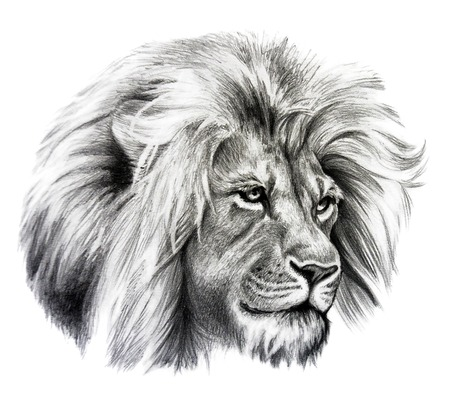 Photo pour Pencil drawing of Lion head. Isolated on white background. - image libre de droit