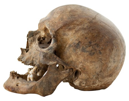 Close-up Photo of Human Skull Isolated on white background