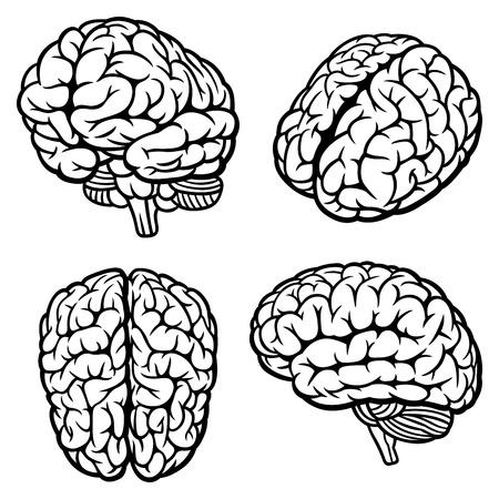 Human Brain  Set of four views  Vector Illustration