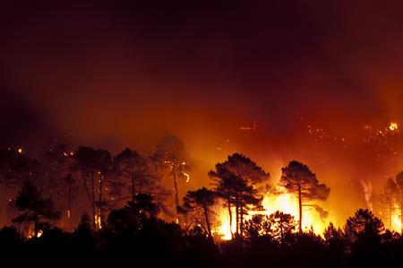 Photo pour Forest fire, Pinus pinaster, Guadalajara (Spain) - image libre de droit