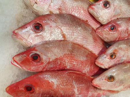 Photo pour heap of raw red fish in a market - image libre de droit