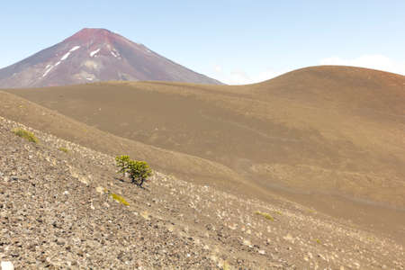 Lonquimay and Tolhuaca volcano, in Malalcahuello and Nalcas National Park, Chile
