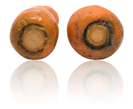 Two unwashed raw carrots stems, biologically grown, isolated over white with a faint removable reflection.