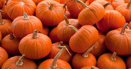 Piles of assorted pumpkins