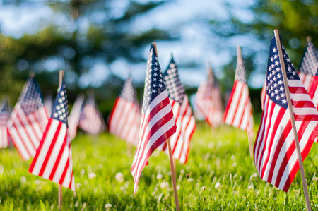 Photo for Memorial Day celebration.  Small American flags on a green grass in park. - Royalty Free Image