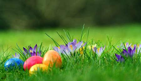 Photo pour meadow with easter eggs and crocus - image libre de droit