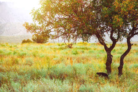 Photo for Colorful tree in the savannah. Yellow grass. Summer Landscape - Royalty Free Image