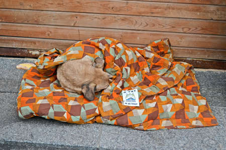 KIEV - DEC 05  Dog sleeps under coverlet on Euro maidan meeting in Kiev on December 05, 2013  Meeting devoted to declining of Ukraine for integration to the European Union