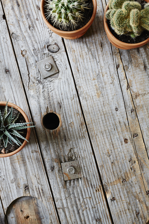variety of cactuses framing space on used wooden cable drum