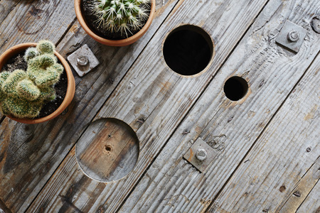 two cacti on used wooden cable drum industrial look