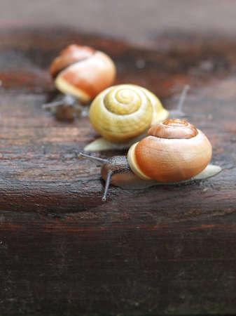 Snails on wood