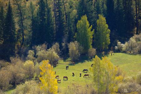 Baihaba Village ranch, Xinjiang