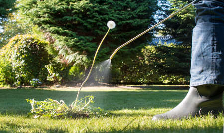 Foto de Spraying weeds in the garden against a dandelion - Imagen libre de derechos