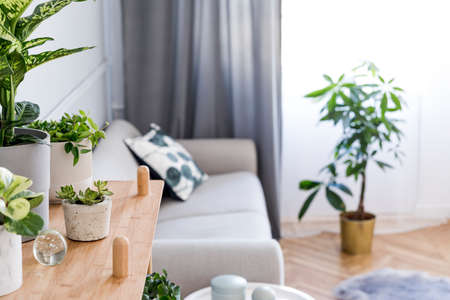 Foto de Stylish and minimalistic boho interior of living room with wooden shelf, gray sofa, design and elegant accessories. Botany home decor with a lot of plants. Bright and sunny space. Home garden. - Imagen libre de derechos