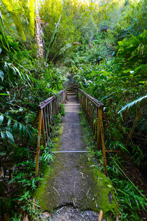 Underwood hiking road at Reunion Island during a sunny day