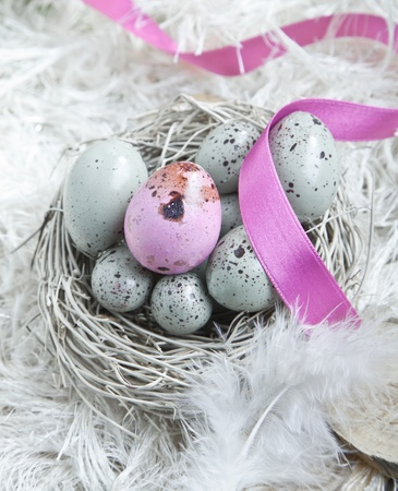 Speckled blue Easter Eggs in a nest on feathers with one single pink one and a pink ribbon
