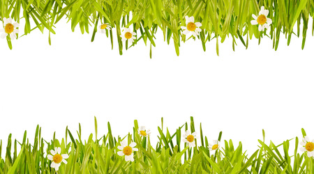 Photo pour Double spring border of fresh new green grass with delicate white daisies with central white copy space between in a panoramic format - image libre de droit