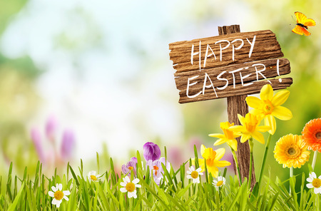 Joyful colorful spring background for a Happy easter with seasonal greeting handwritten on a rustic wooden sign board in spring countryside with fresh green grass and flowers, copy space above