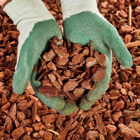 Foto de Close up on pair of green rubber coated cloth gloved hands full of pine bark mulch wood chips - Imagen libre de derechos