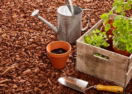 Foto de Planting pots, trowel, steel watering can and wooden box full of seedlings over red pine bark mulch outdoors - Imagen libre de derechos