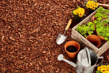 Foto de Planting pots, trowel, steel watering can and wooden box full of seedlings over red pine bark mulch with copy space outdoors - Imagen libre de derechos