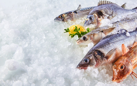 Foto de High Angle Still Life of Variety of Raw Fresh Fish Chilling on Bed of Cold Ice in Seafood Market Stall with Copy Space - Imagen libre de derechos