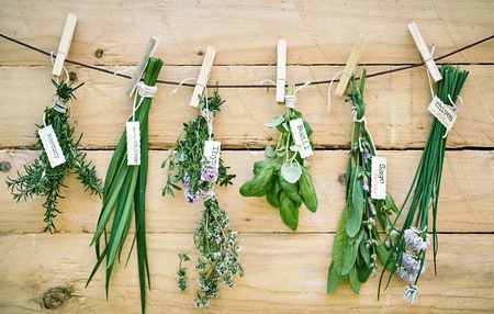 Photo for Assorted bunches of fresh herbs with name tags hanging against a wooden wall on a string with rosemary, basil, thyme, sage - Royalty Free Image