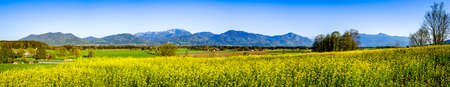Photo for field at the european alps - photo - Royalty Free Image