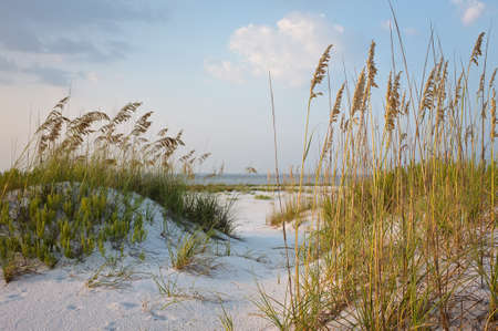 Beach Path in the sand dunes with sea oats, at sunset