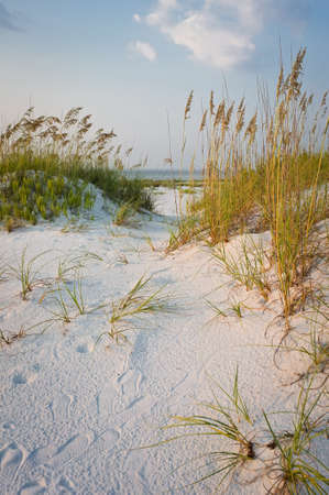 Path in the Sand Dunes at the Beach at Sunset