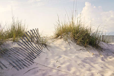 Soft early morning sunlight paints the dunes and sea oats on a sandy beach accented by weathered wooden sand fences
