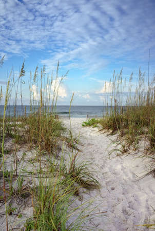 Beach path through white sand dunes and sea oats leads to calm ocean on a summer morning