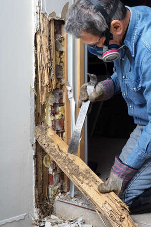Man removing wood damaged by termite infestation in house