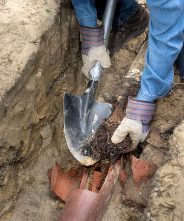 Foto für Man crouching in trench with shovel showing an old terracotta sewer line broken open to reveal a solid tube of invasive tree roots. - Lizenzfreies Bild