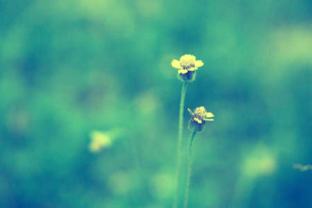 Blur and sof  Grass Flower  soft focus  abstract spring ,nature background