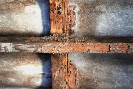 Photo pour House construction  with termites damage - image libre de droit