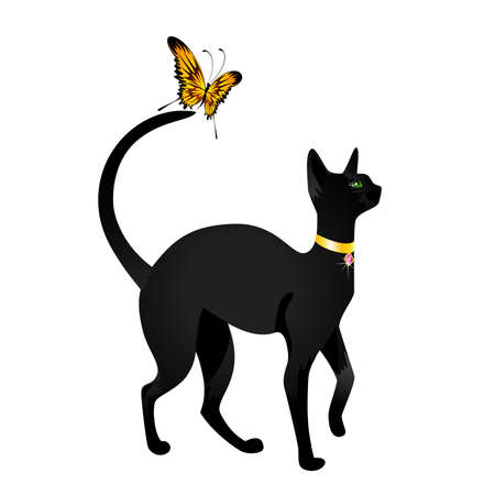 black cat on  background with the butterfly